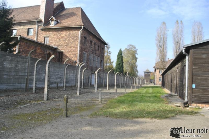 auschwitz_23-10-2010-041
